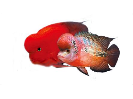觀賞魚飼料-統一Aqua master